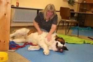 Massage beim Hund