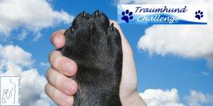 Traumhund_Challenge